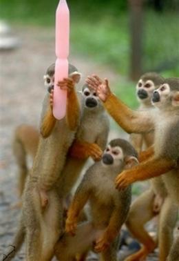 Squirrelmonkeyicedildo